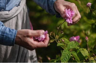 Топ 5 ползи от използването на натурална козметика с розово масло